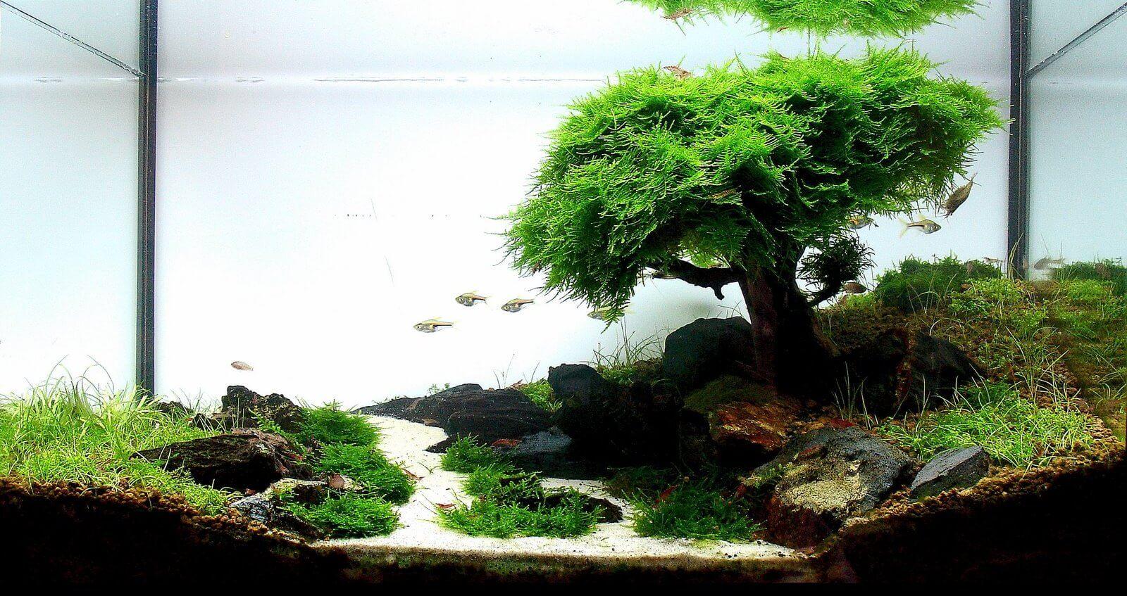 tumba-pod-akvarium (20)